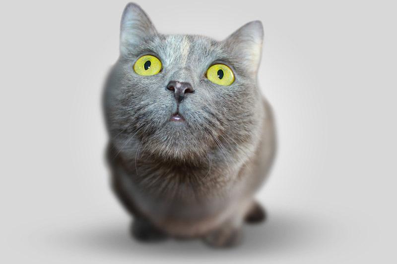 An attentive cat
